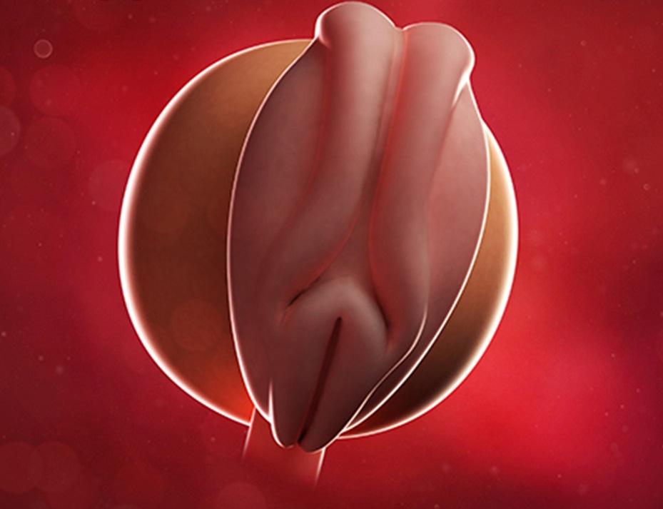 موارد ممنوعه در هفته سوم بارداری